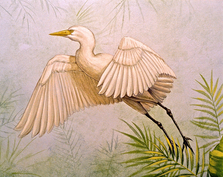 Detail Egret, Jungle