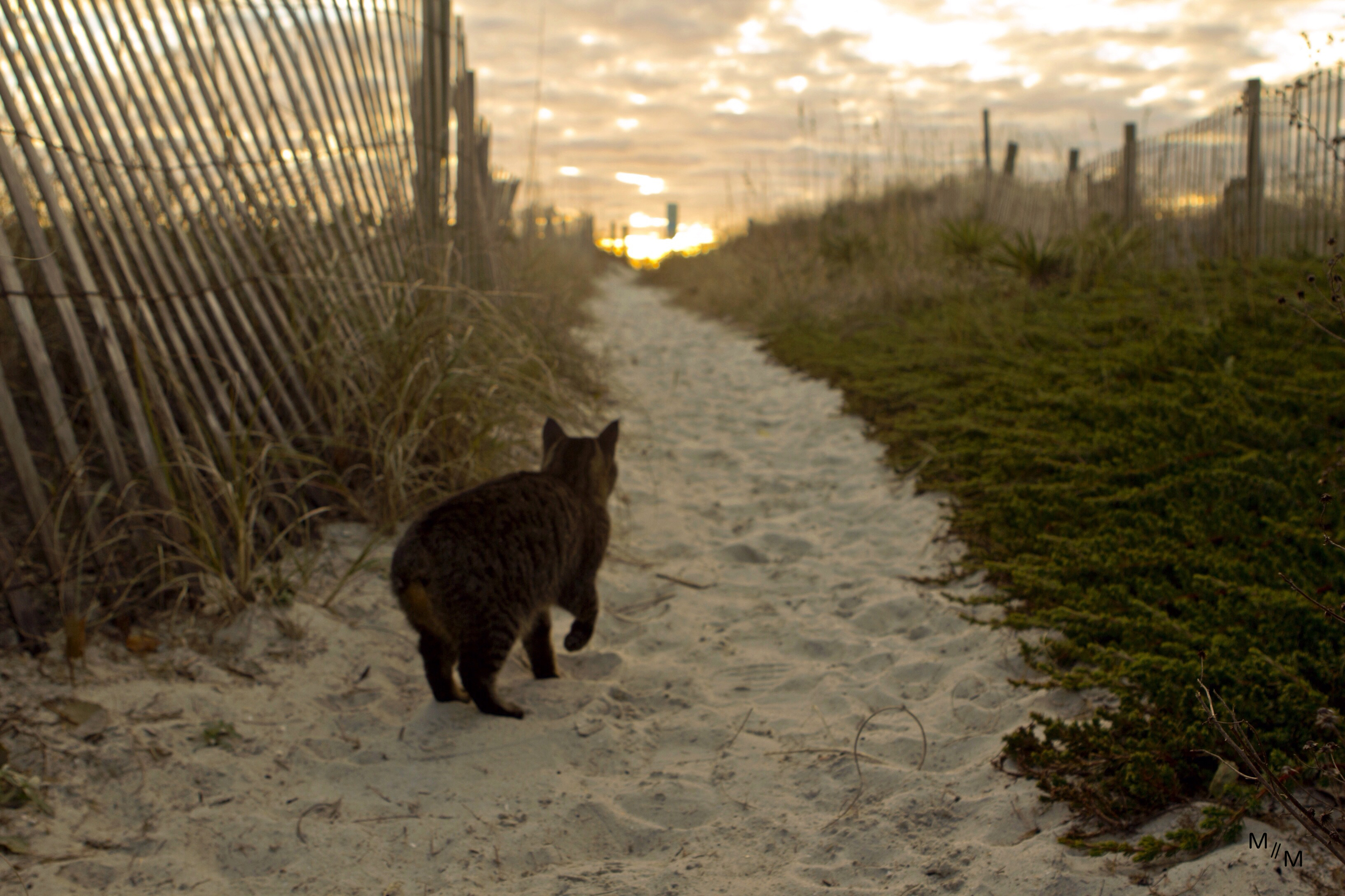 Dunecat leads the way