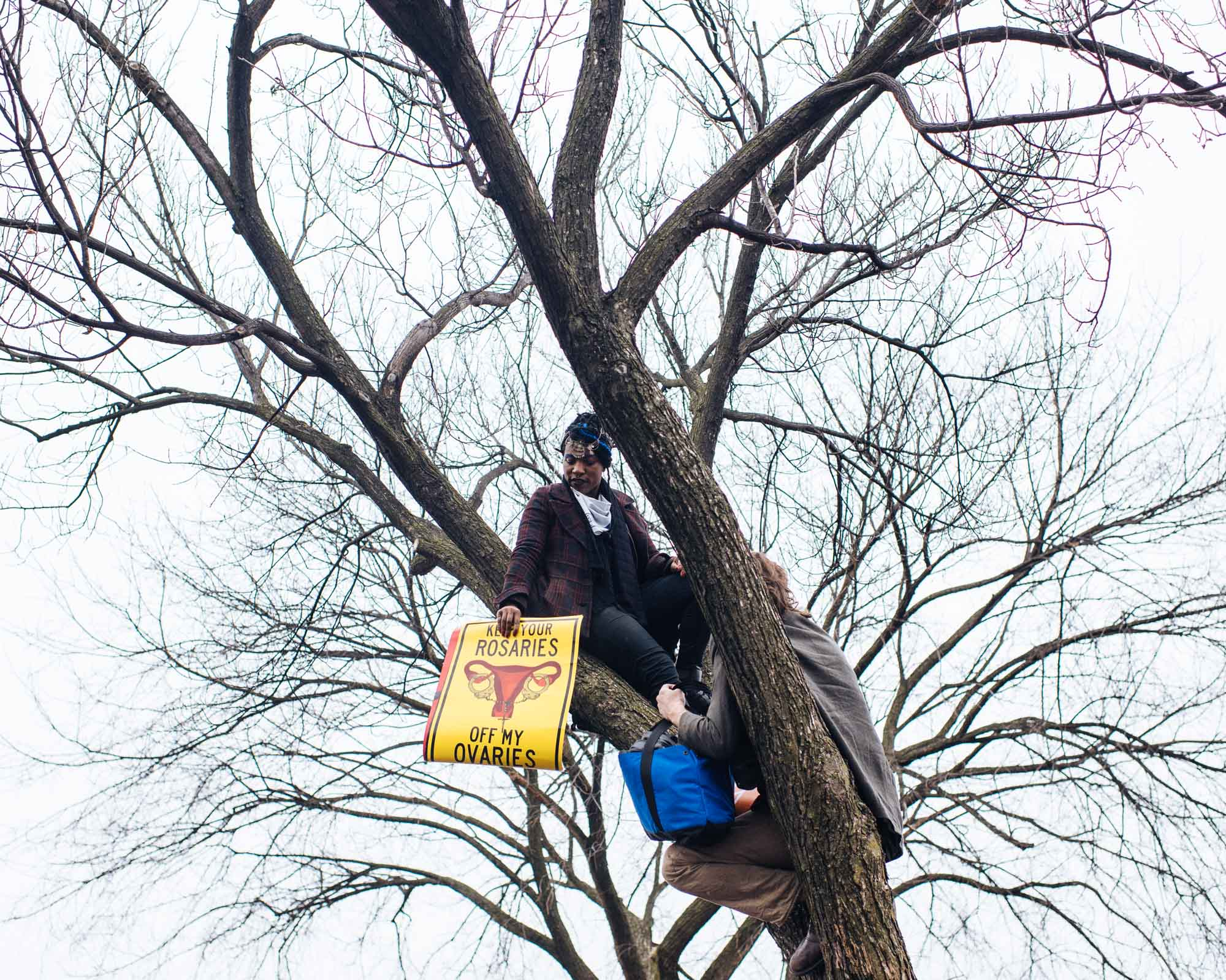 A protester of the woman's march sits in the tree on the Washington Mall holding a sign.