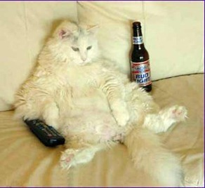 Cats of Britain, put the remote down!