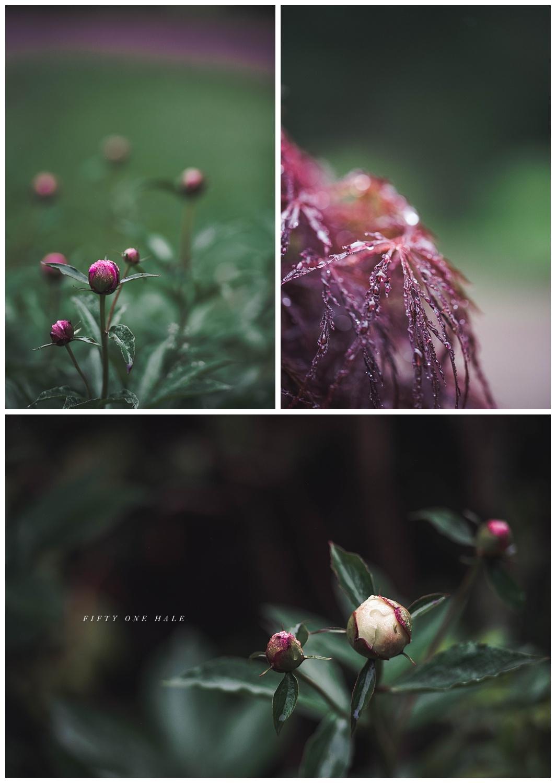 Backyard_Wenham_Macro_Photography_Rain_0000.jpg