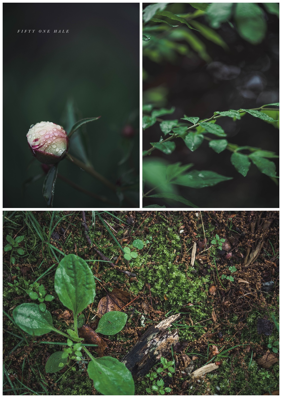 Backyard_Wenham_Macro_Photography_Rain_0001.jpg