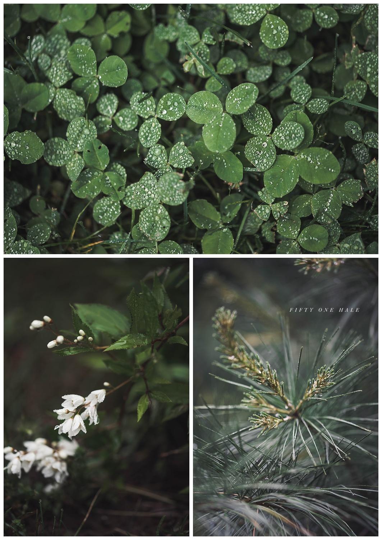 Backyard_Wenham_Macro_Photography_Rain_0002.jpg