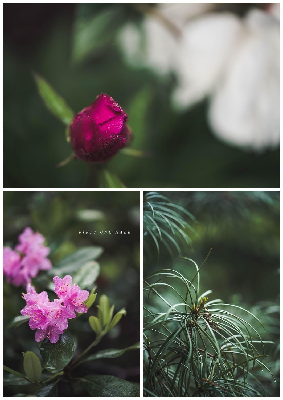Backyard_Wenham_Macro_Photography_Rain_0003.jpg