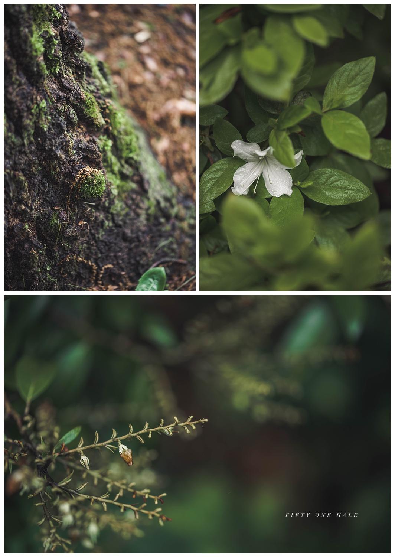 Backyard_Wenham_Macro_Photography_Rain_0005.jpg