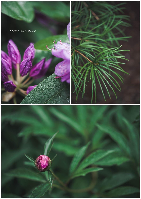 Backyard_Wenham_Macro_Photography_Rain_0006.jpg