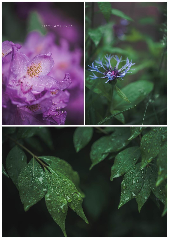 Backyard_Wenham_Macro_Photography_Rain_0007.jpg