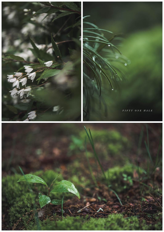 Backyard_Wenham_Macro_Photography_Rain_0008.jpg