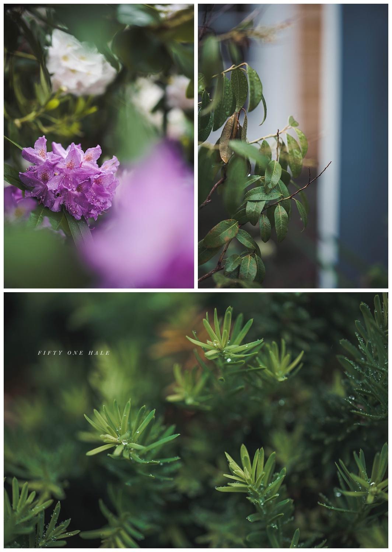Backyard_Wenham_Macro_Photography_Rain_0009.jpg