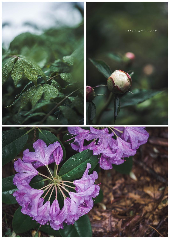 Backyard_Wenham_Macro_Photography_Rain_0010.jpg