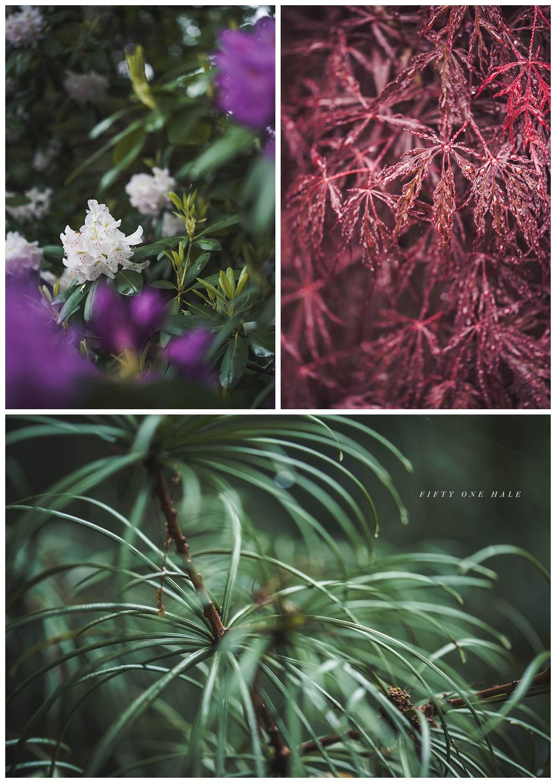 Backyard_Wenham_Macro_Photography_Rain_0011.jpg
