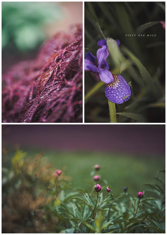 Backyard_Wenham_Macro_Photography_Rain_0013.jpg