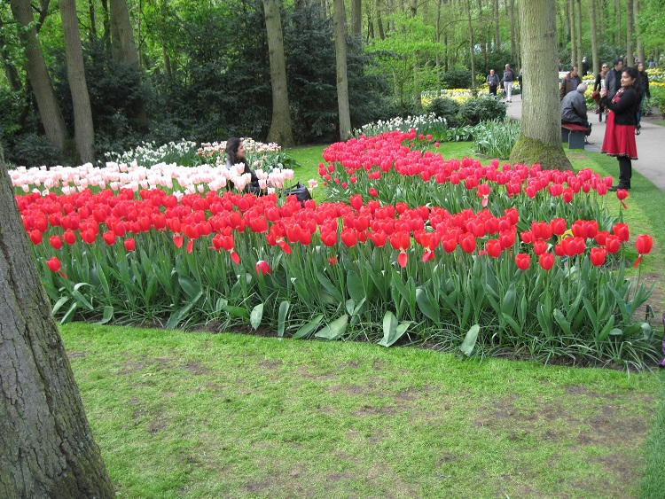 Keukenhof gardens outside of Amsterdam.jpg