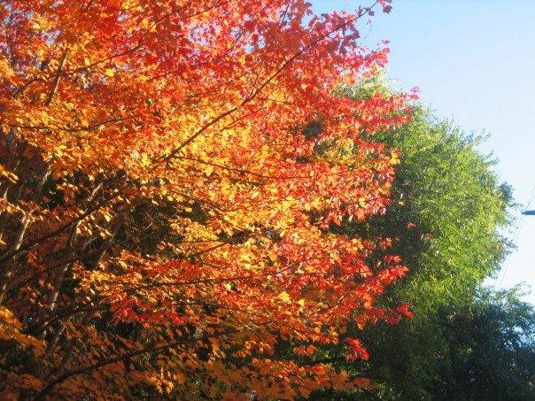 Oregon in the fall.