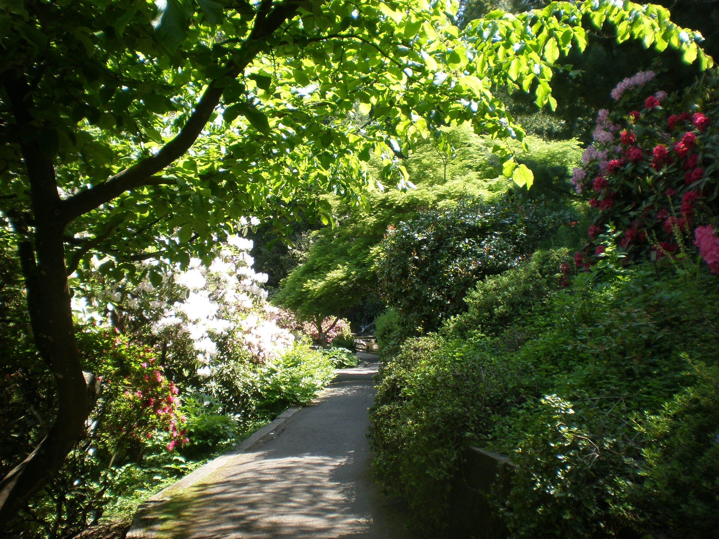 Path through a garden near the University of Oregon