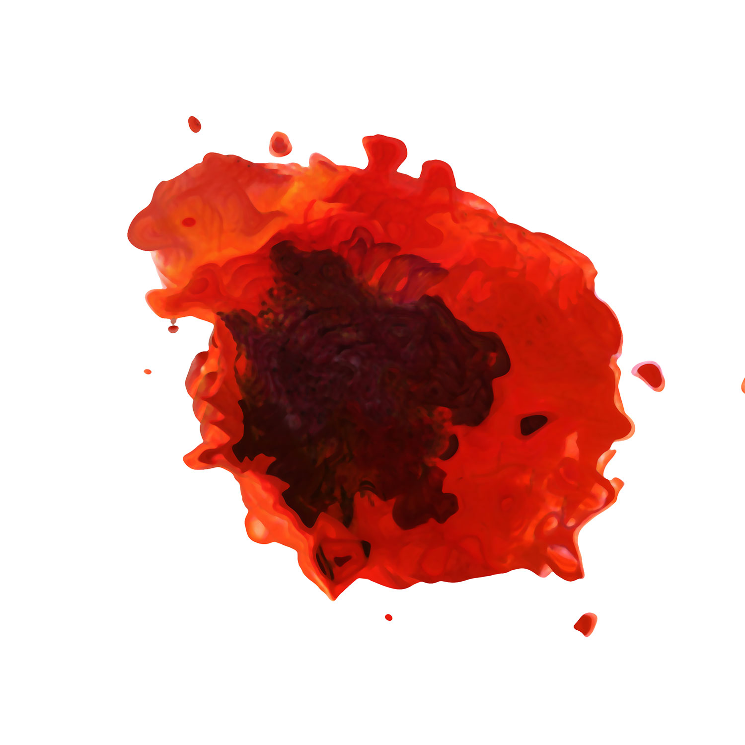 Poppy Love, 30X30 Giclee' on Watercolor paper