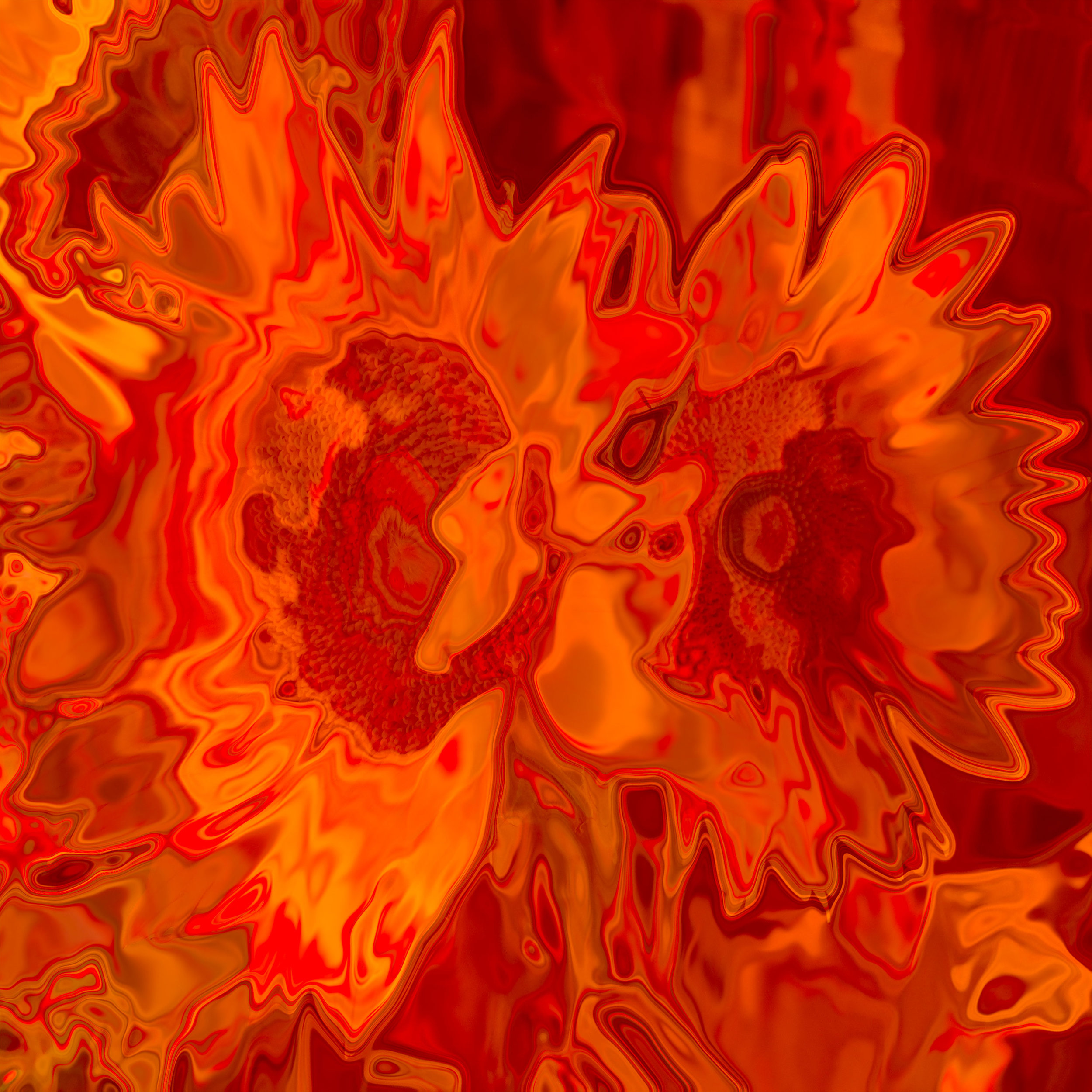 Red-sunflowers.jpg