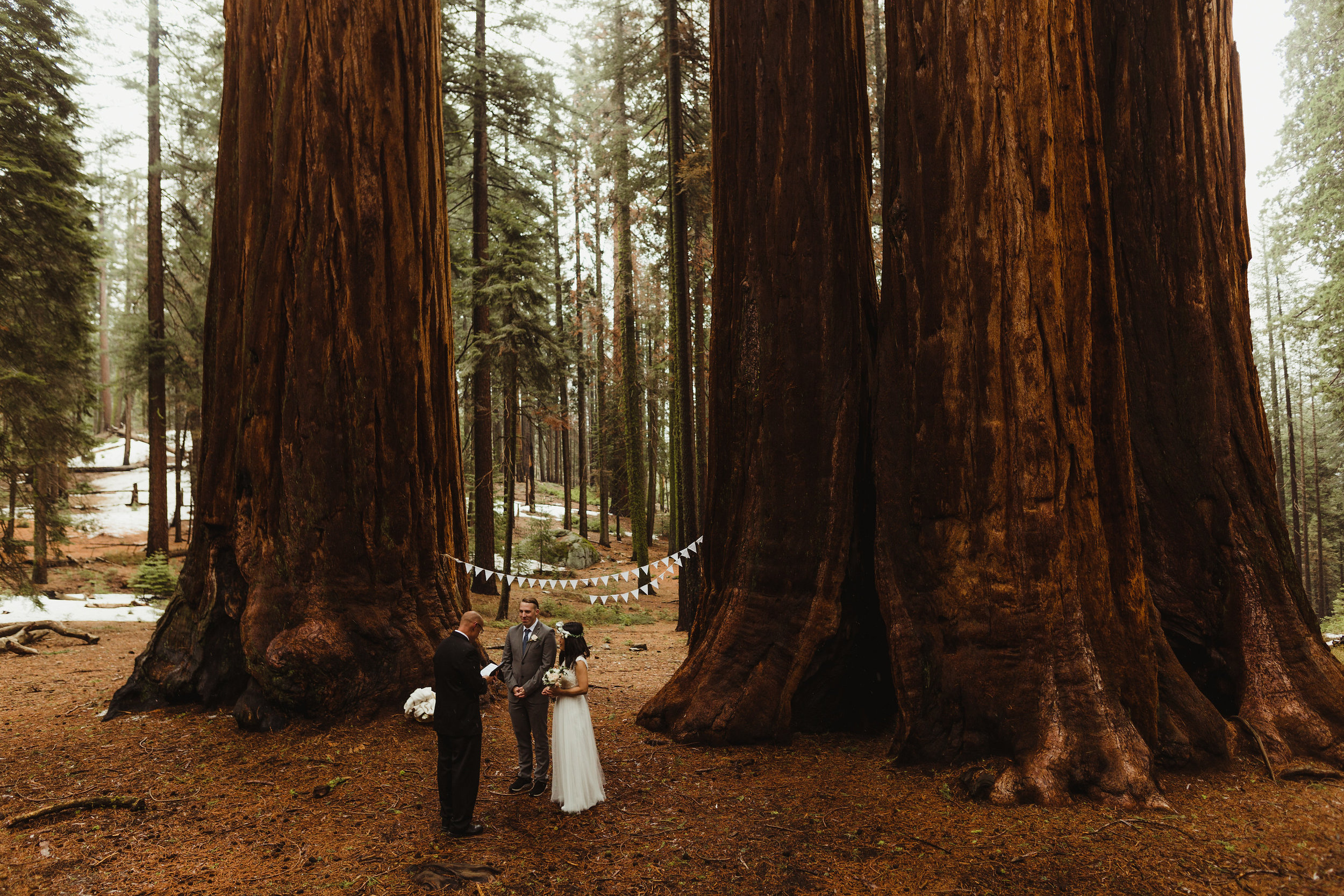 SequoiaNationalParkElopementAfiercelovephotography.jpg