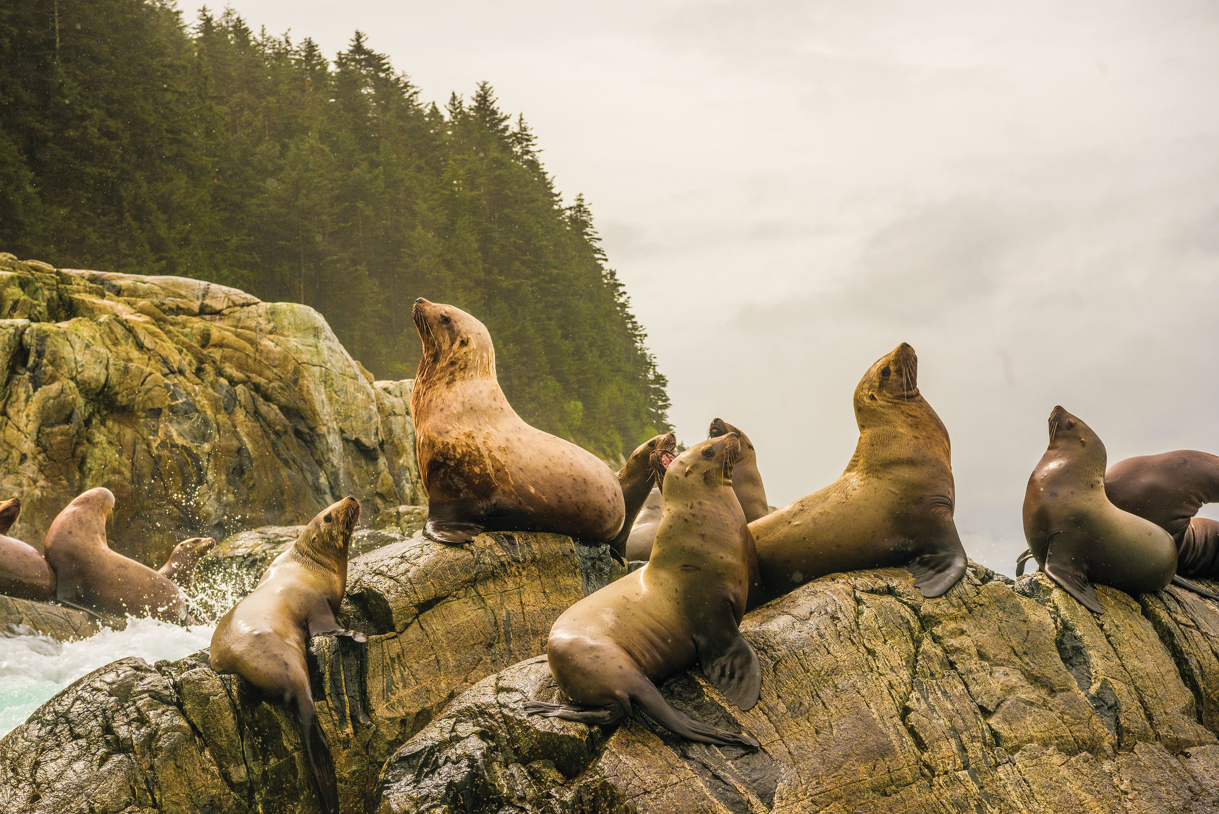 The Inian Islands, near where the Pacific Ocean comes into the northern end of Alaska's inside passage. This area is very rich with nutrients and a variety of marine mammals, such as sea lions.