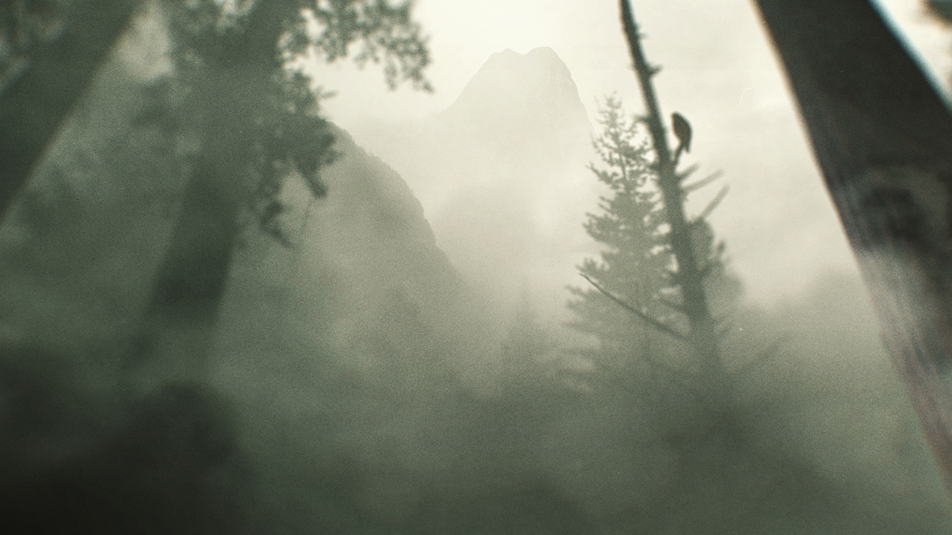 tombRaider_forestWide.jpg