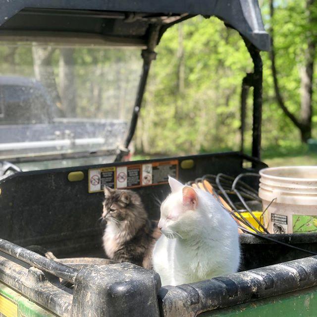gator cats.
