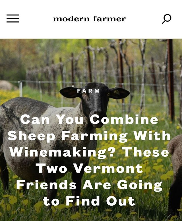 a little something on modern farmer website about grazing the vines. 👩🌾👨🏻🌾