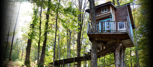 fern-forest-treehouse.jpg