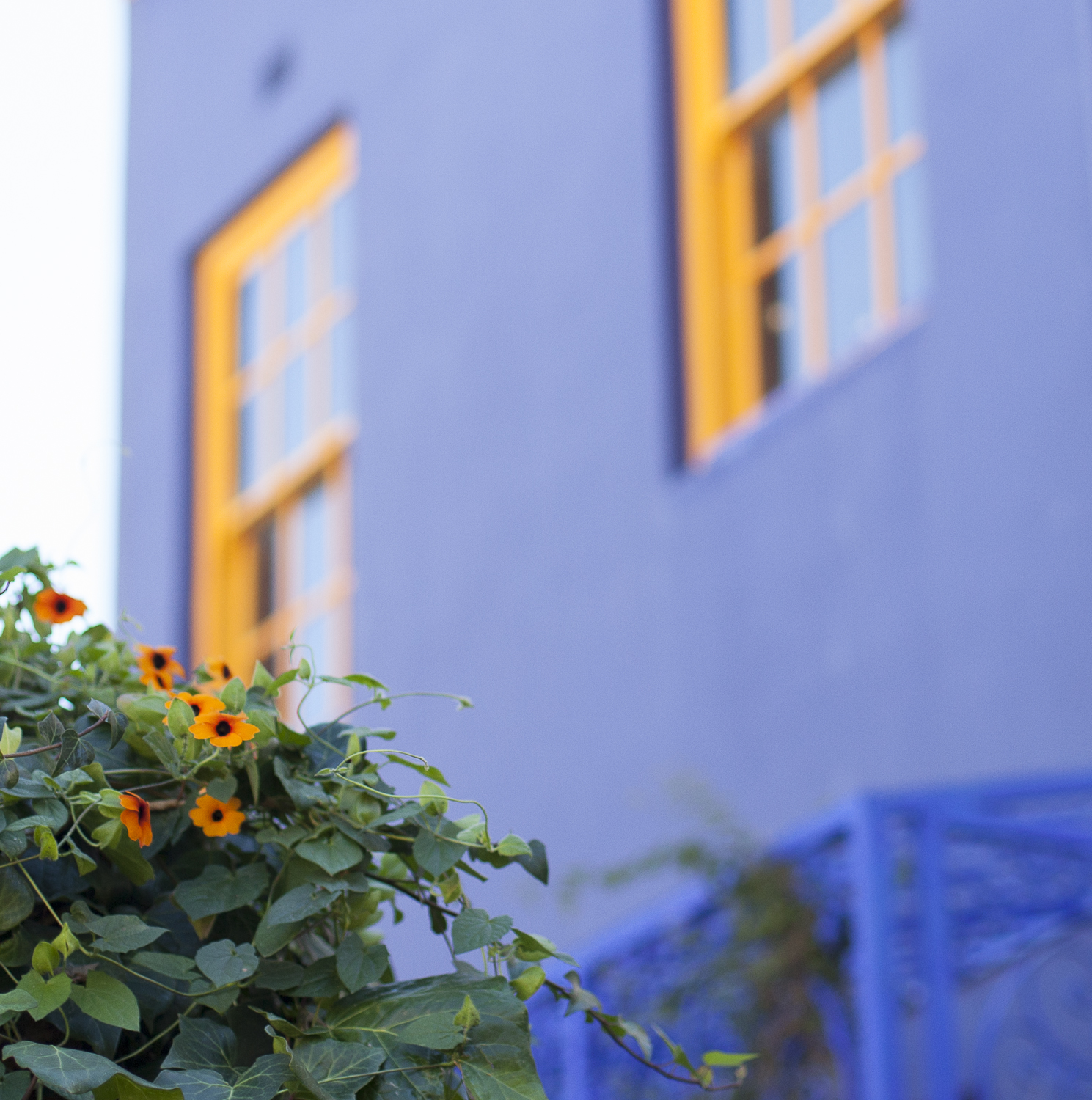 Window Frames & Flowers  © 24 Atlantic All rights reserved