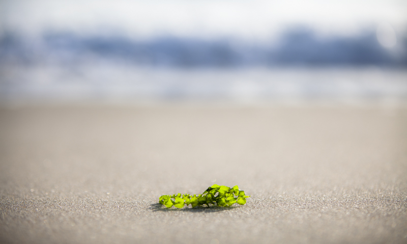 Ocean-9974.jpg