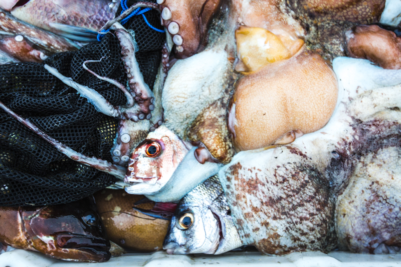 Catch of the Day - marine textures, shapes, and colours.  ©24Atlantic
