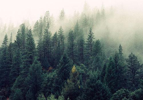 California's North -