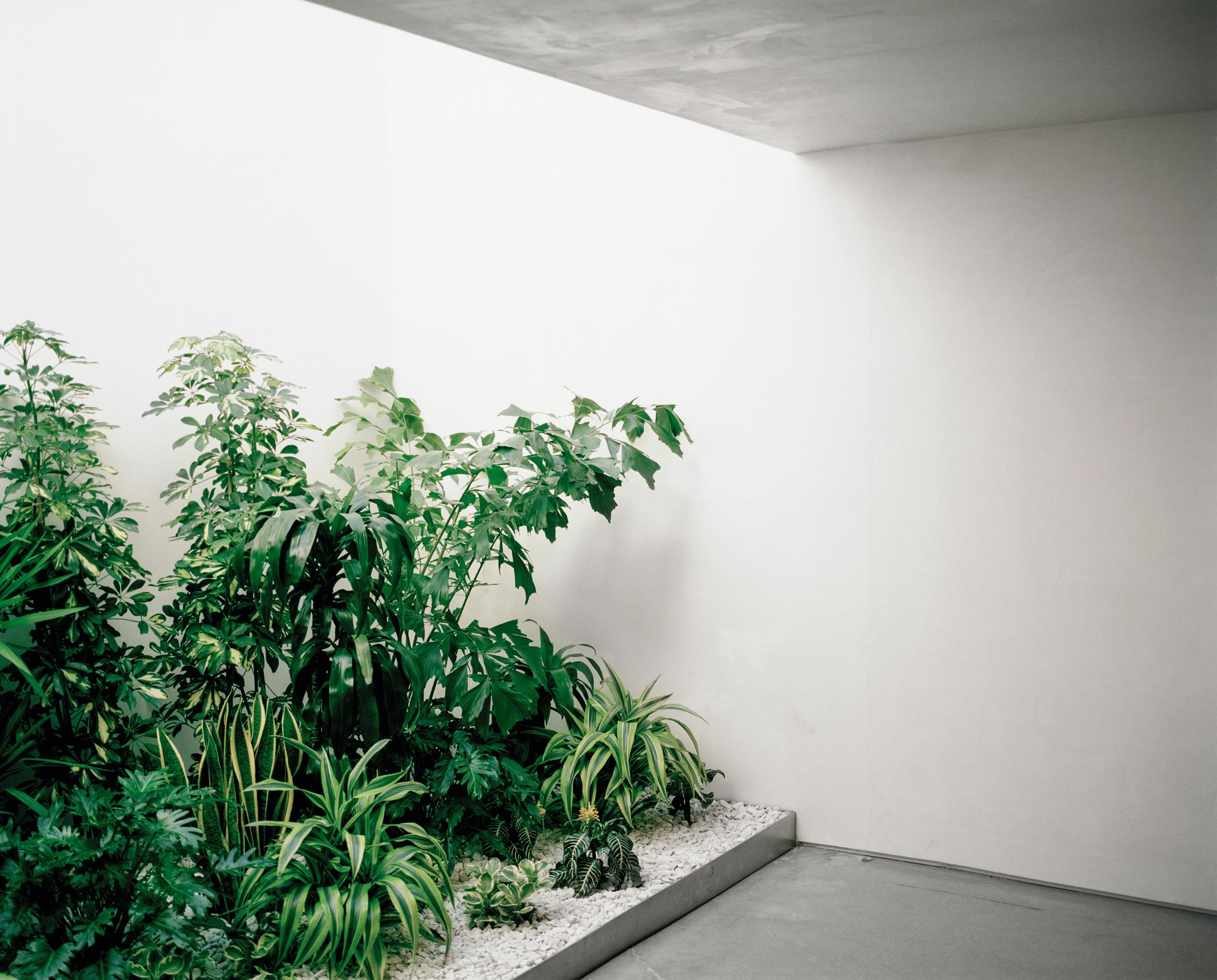 hlang_plants.jpg