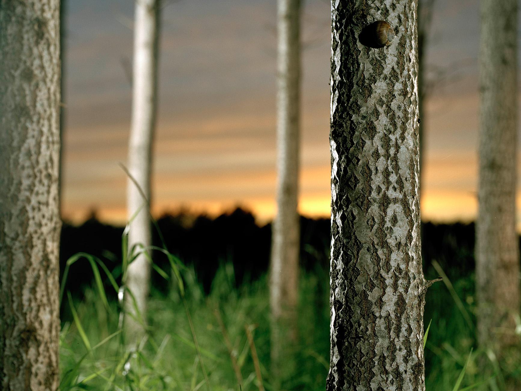 Skog copy.jpg