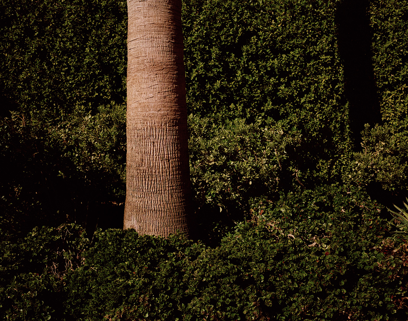 Palm Lager copy.jpg