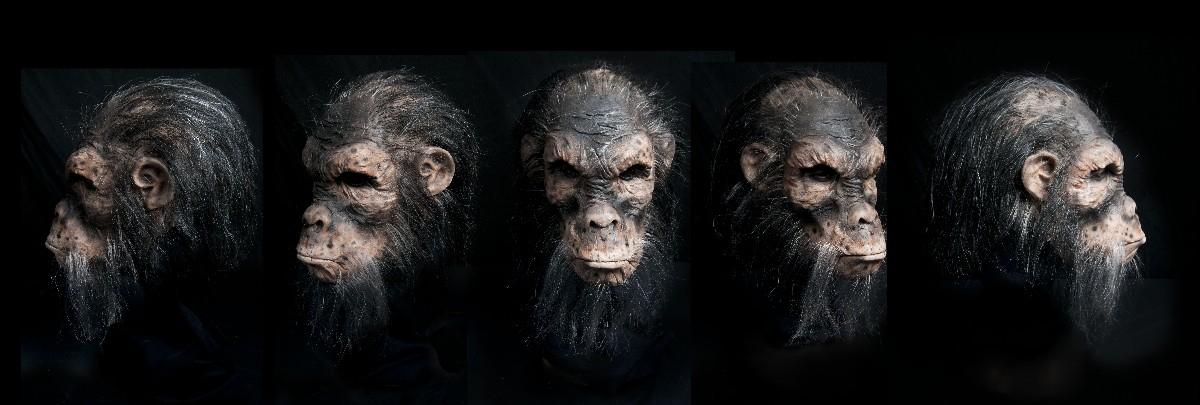 Chimp-1200x405.jpg