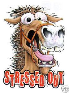 Bilde lånt fra: http://www.ebay.co.uk/itm/W07-Funny-stressed-out-horse-print-t-shirt-11505-p159-/150375204712