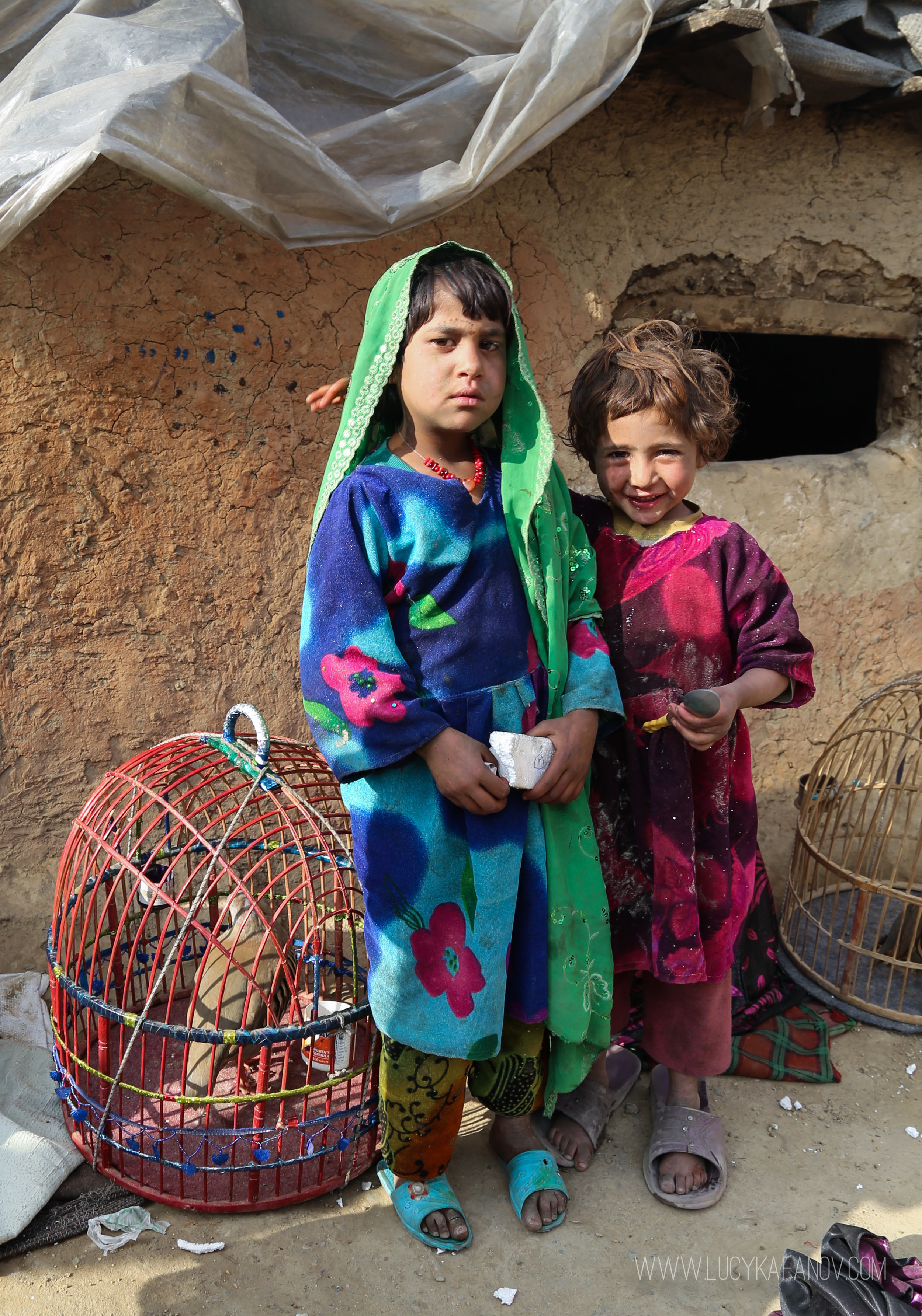 Some families in Afghanistan's IDP camps keep caged pet quails to sell for extra cash. More money can be pocketed by taking bets on quail-fighting bouts.
