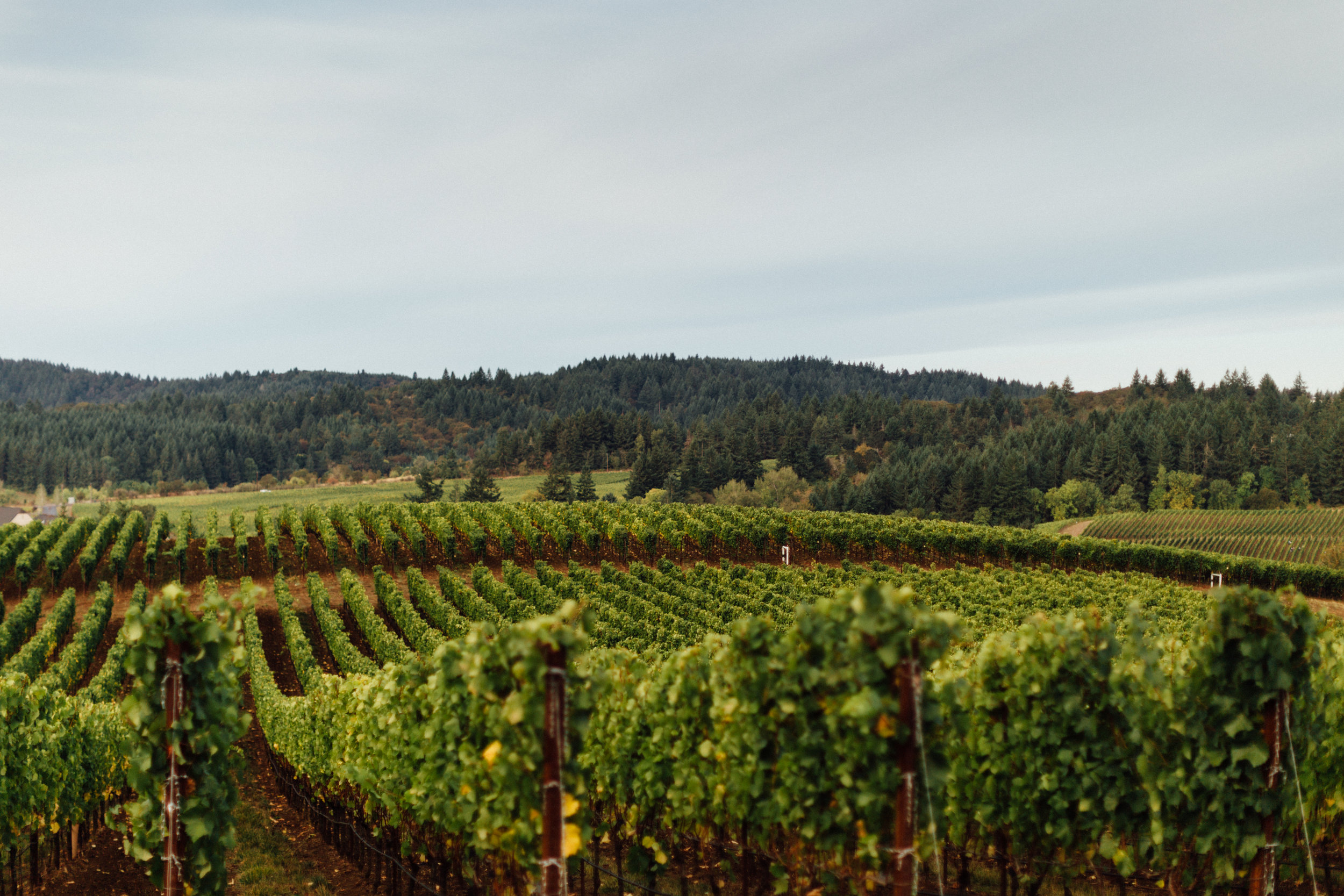 Zena Crown Vineyard