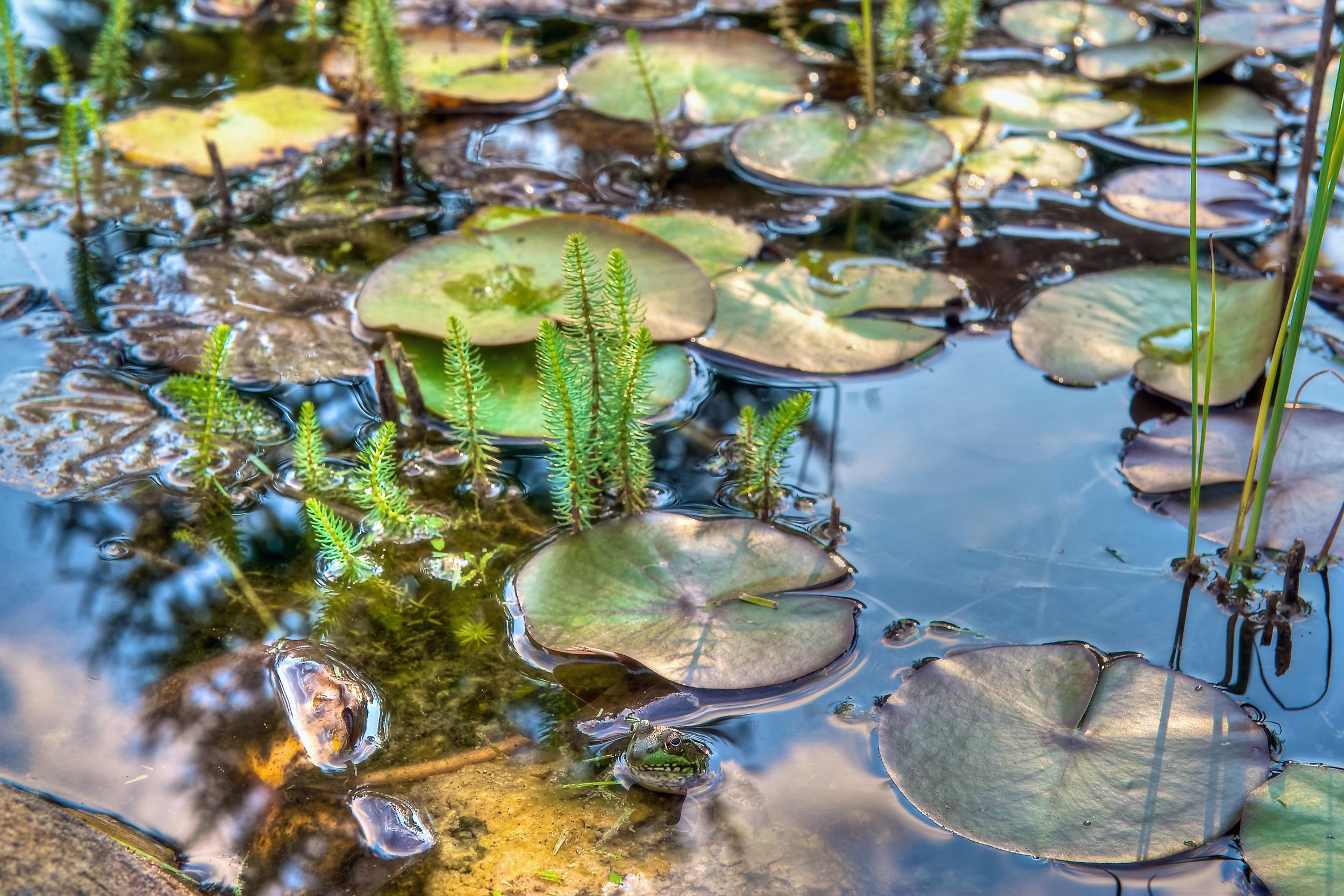 Frog-AP1WEB.jpg