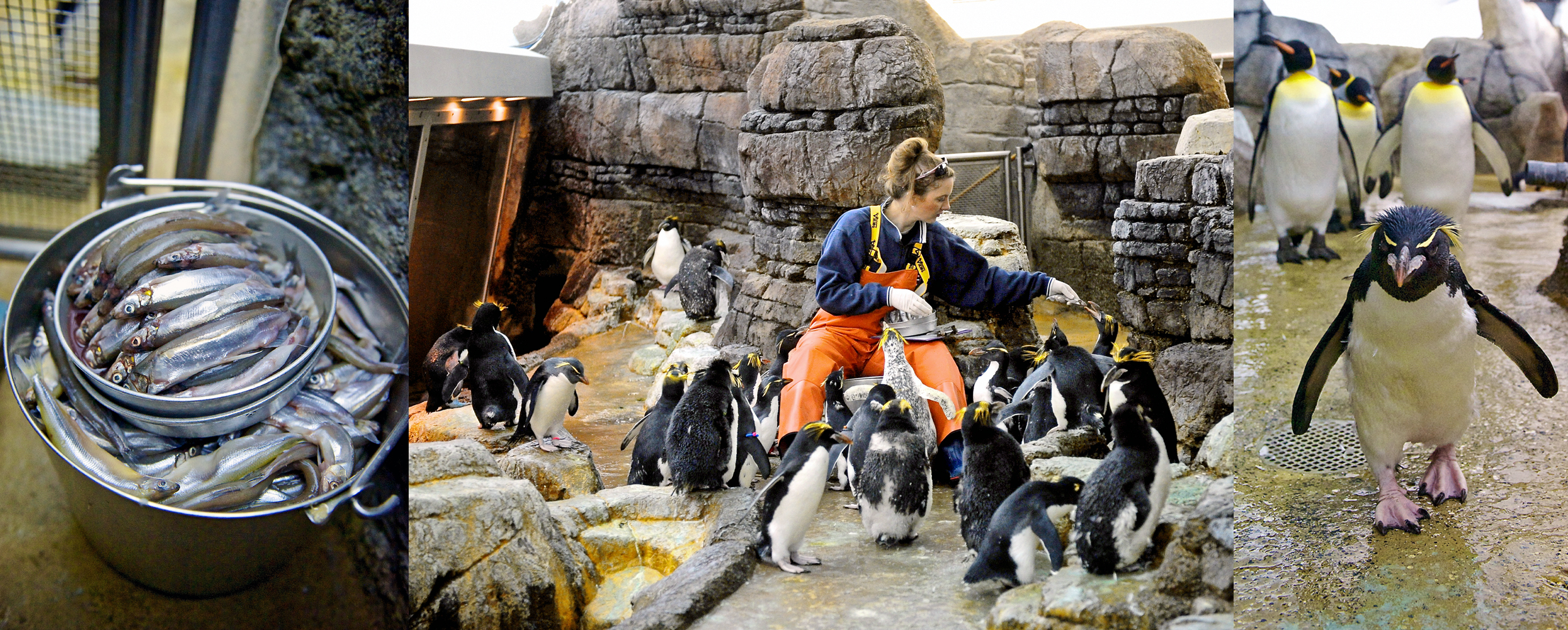 PenguinFeeding.jpg