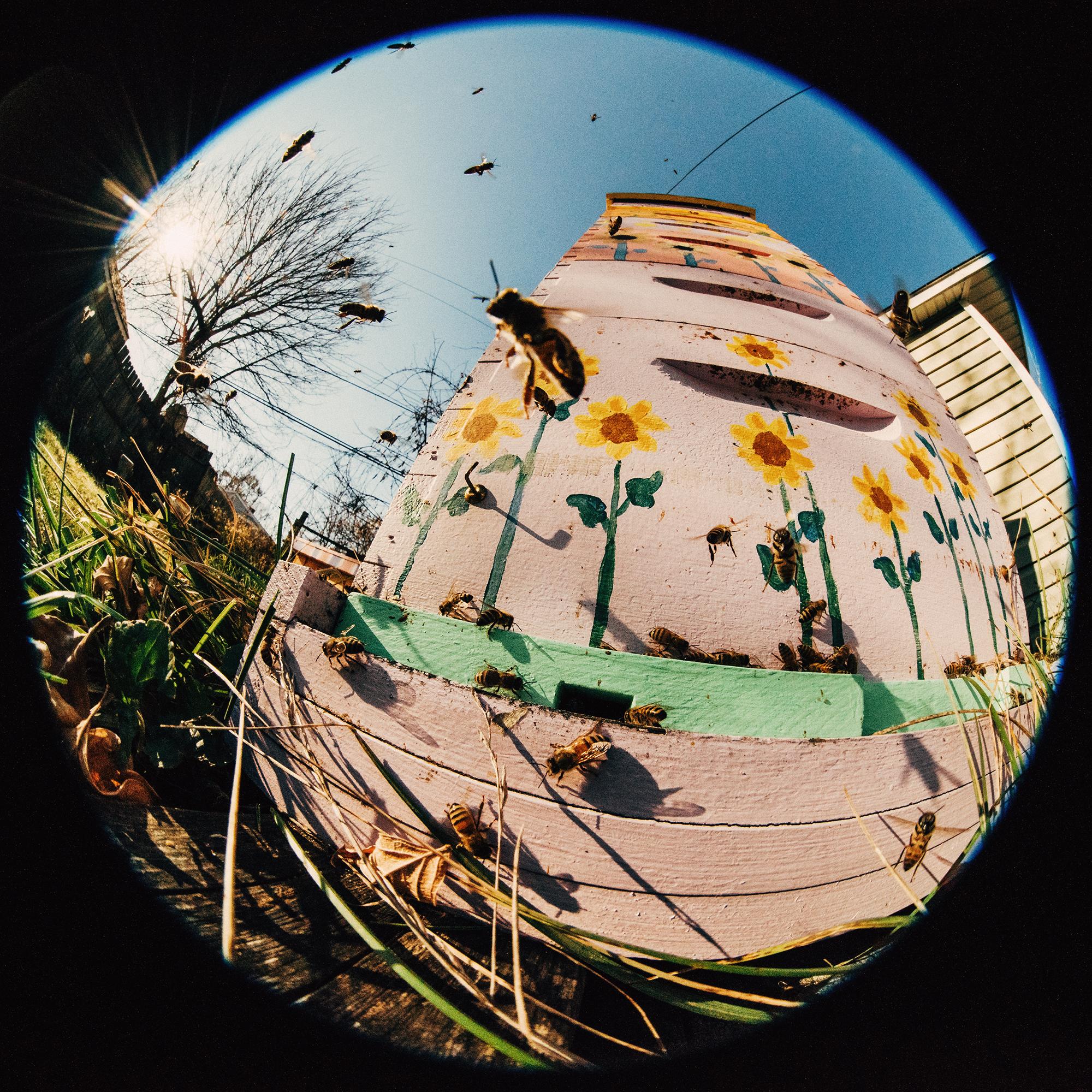 BeesFisheye1B.jpg