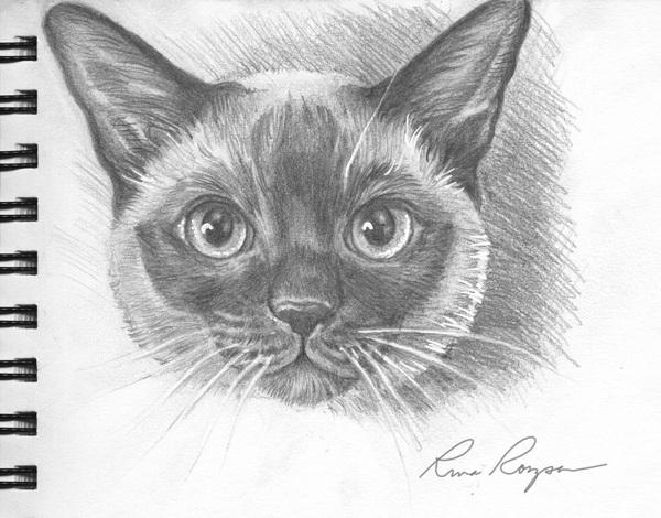 Tonkinese Portrait