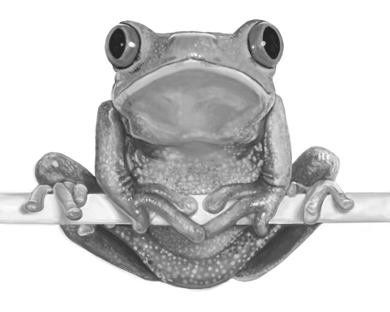 Frog-Homework.jpg
