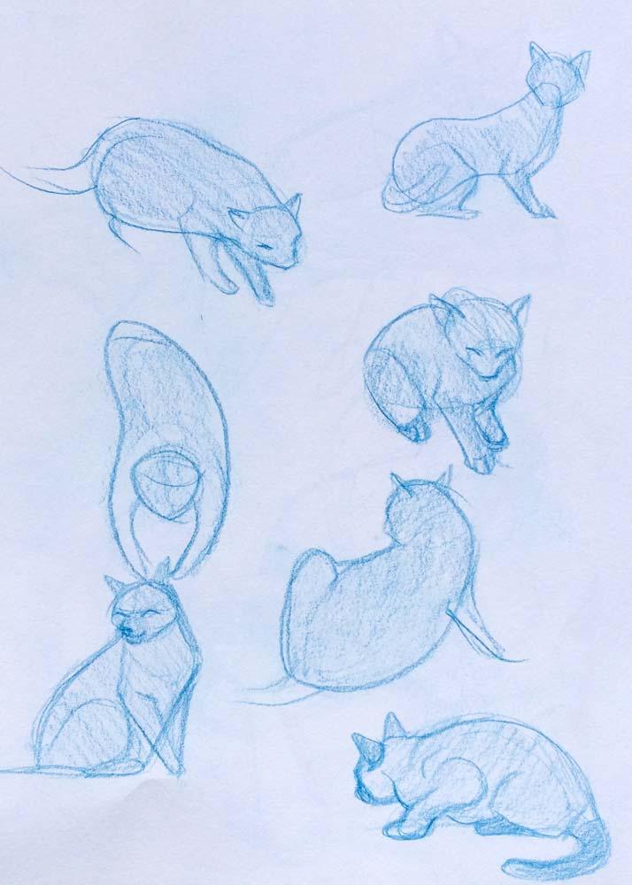 Cat Sketching2.jpg