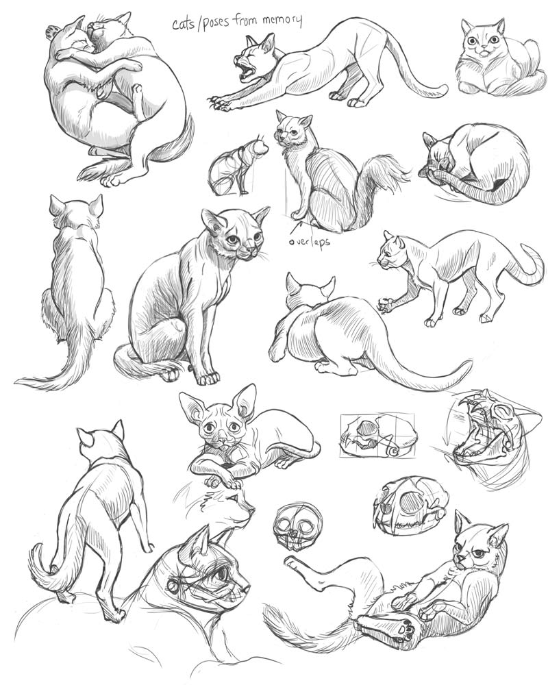 Rina-Rozsas-cat-poses-from-memory.jpg
