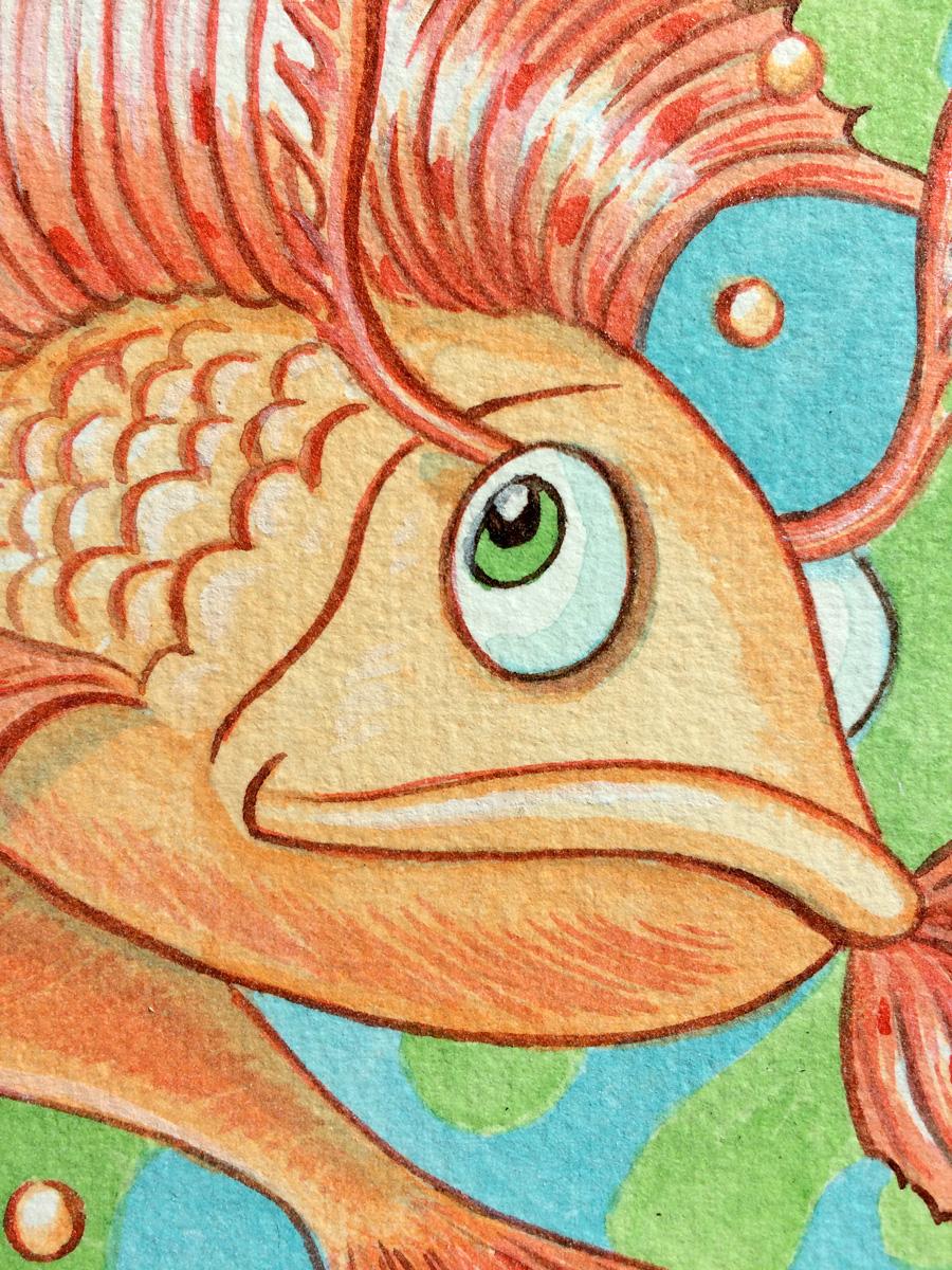 Betta-Fish-closeup.jpg