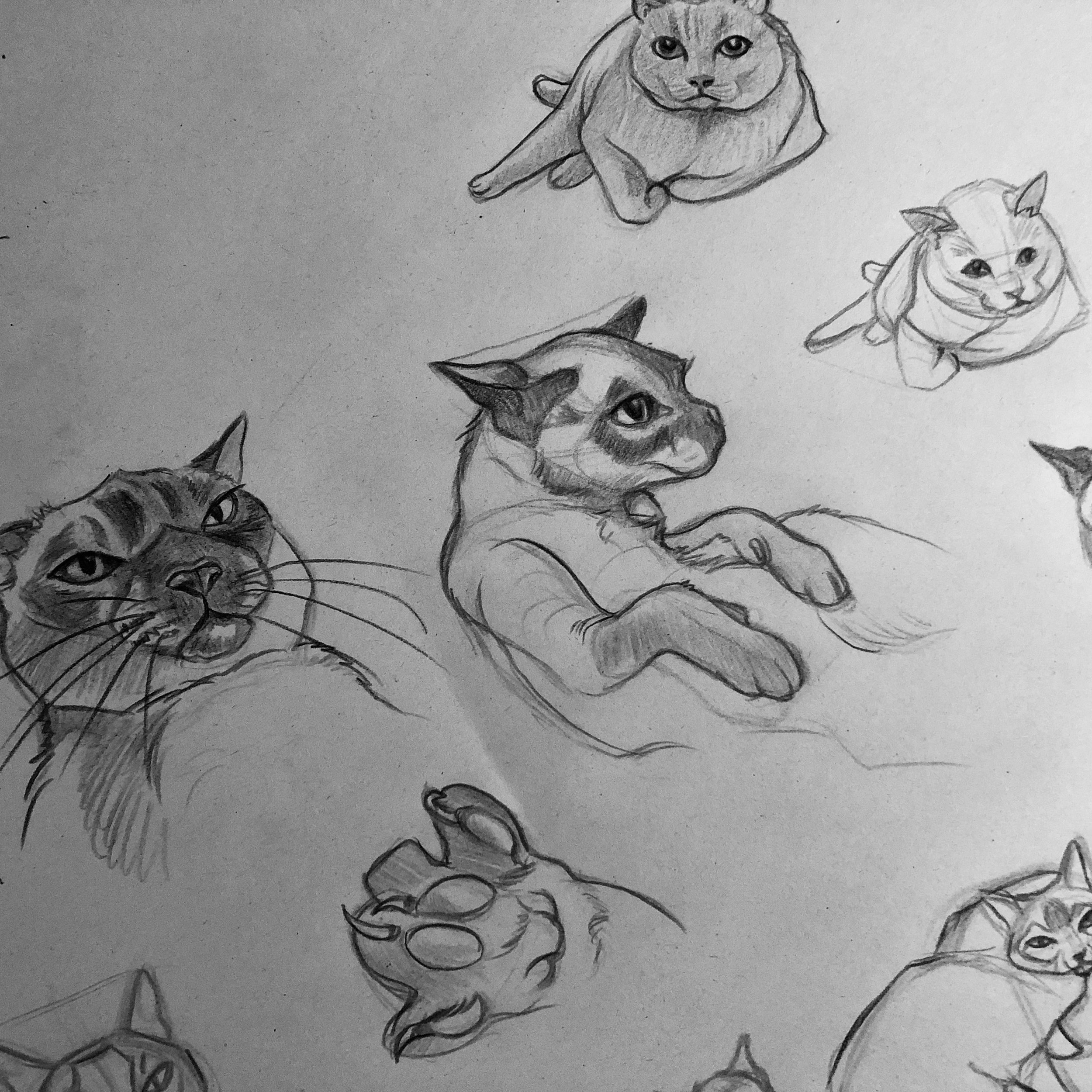 Sketches of My Cat, Dax