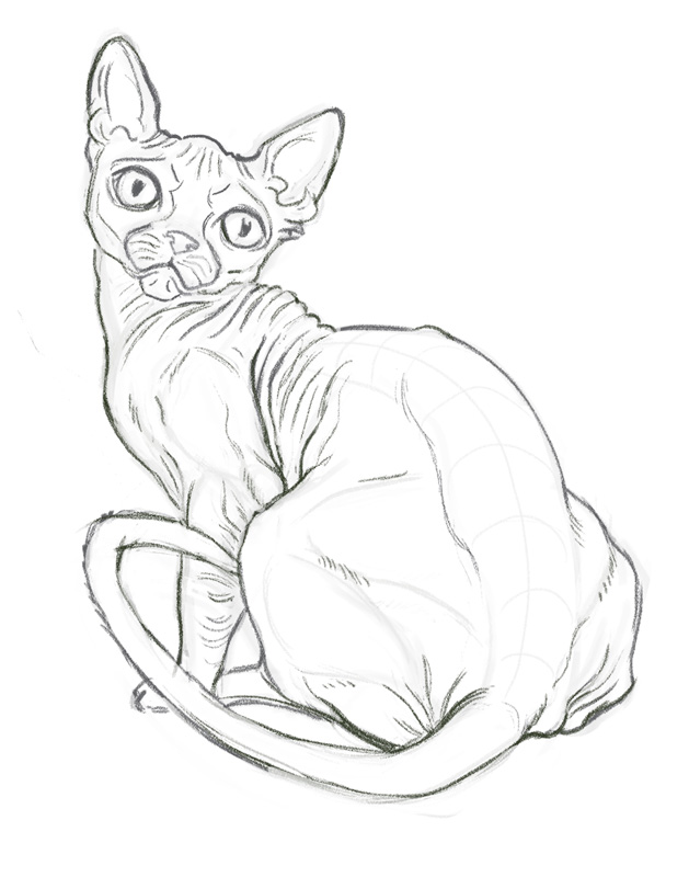 Hairless Cat Study