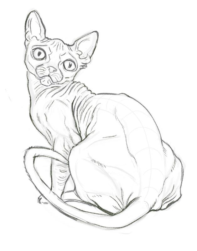 Hairless Cat Study