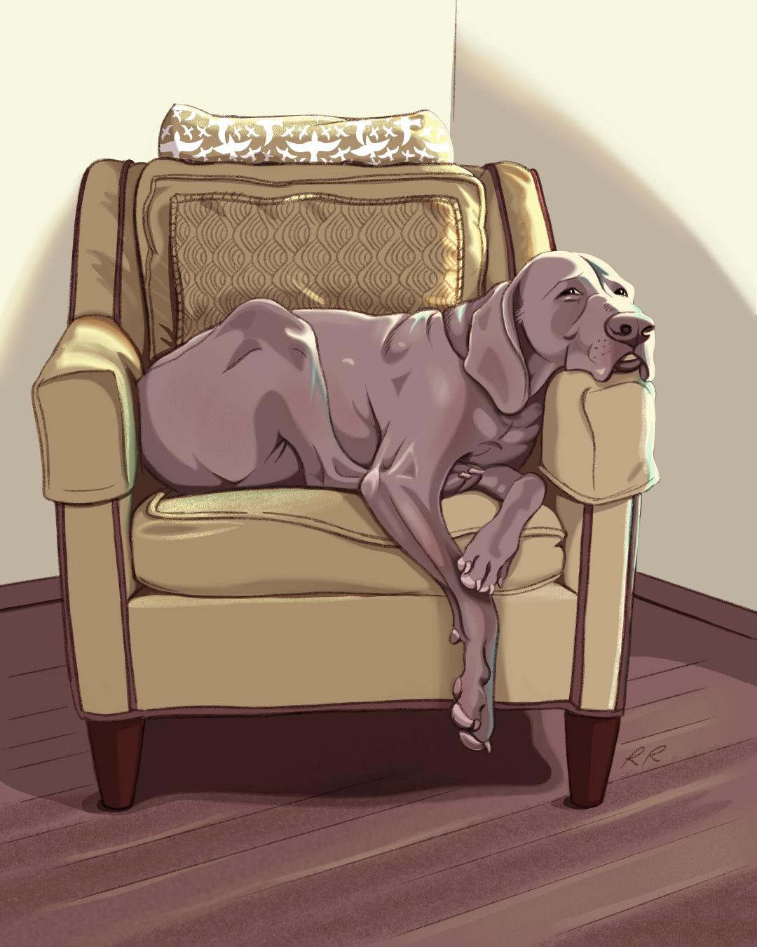 Mr. T Pet Portrait